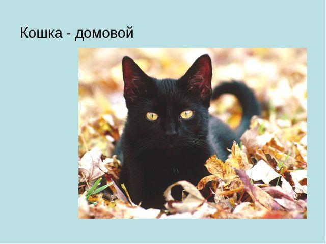 Кошка - домовой