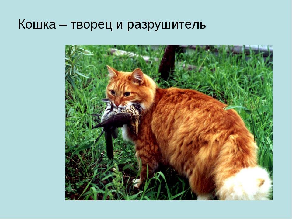 Кошка – творец и разрушитель