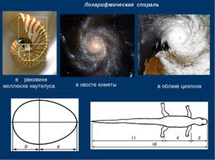 Логарифмическая спираль в раковине моллюска наутилуса в хвосте кометы в обла