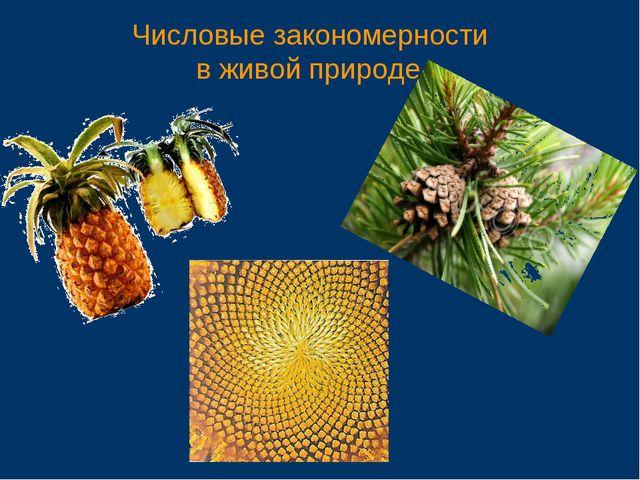 Числовые закономерности в живой природе