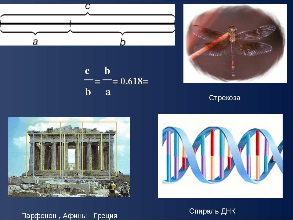 c b b a = = 0.618= φ Парфенон , Афины , Греция Стрекоза Спираль ДНК