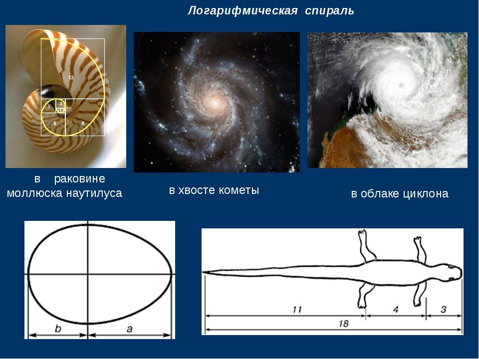 Логарифмическая спираль в раковине моллюска наутилуса в хвосте кометы в обла...