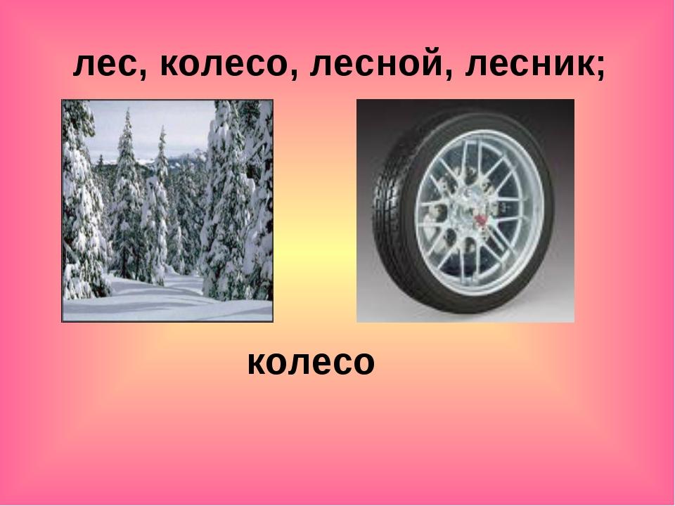 лес, колесо, лесной, лесник; колесо