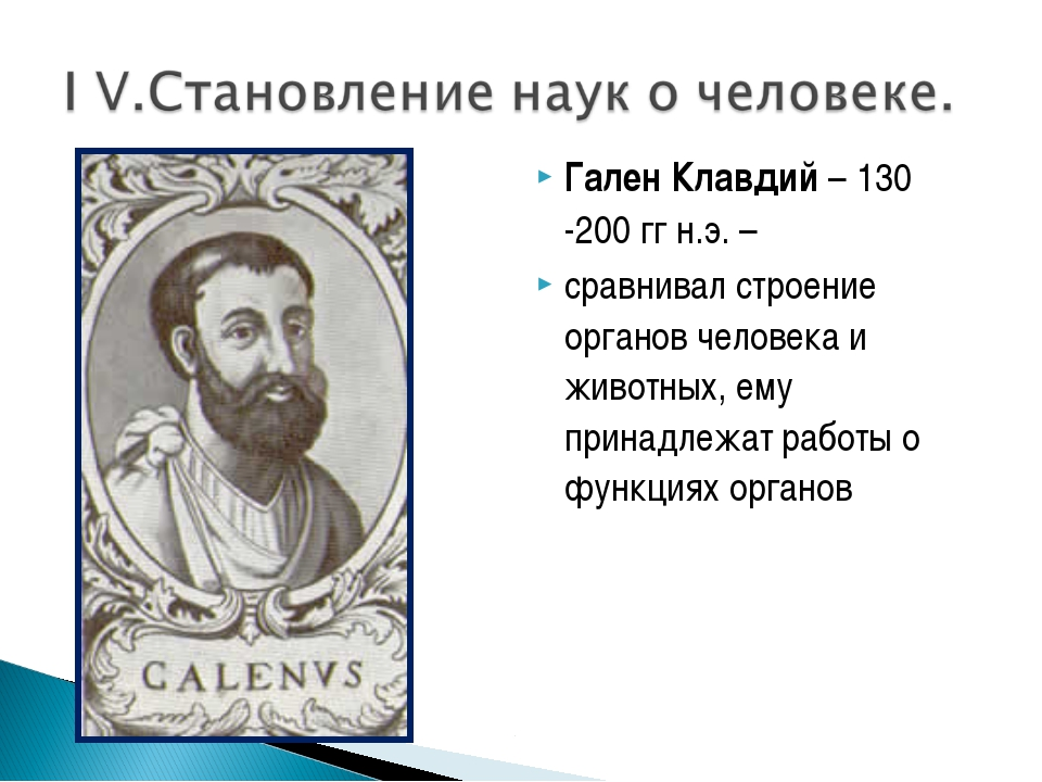 Гален Клавдий – 130 -200 гг н.э. – сравнивал строение органов человека и живо...