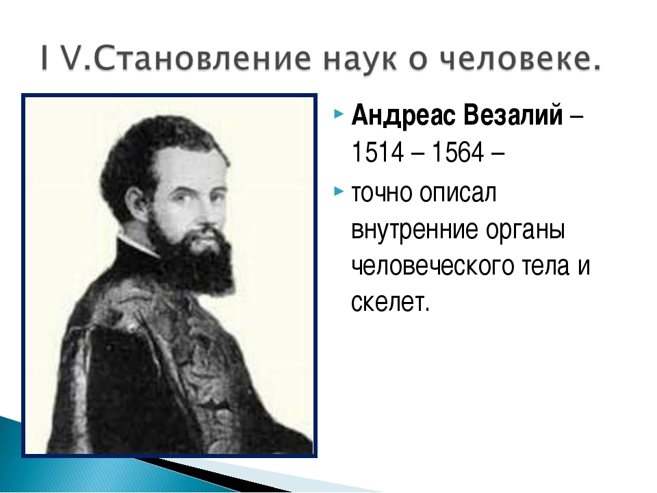 Андреас Везалий – 1514 – 1564 – точно описал внутренние органы человеческого...
