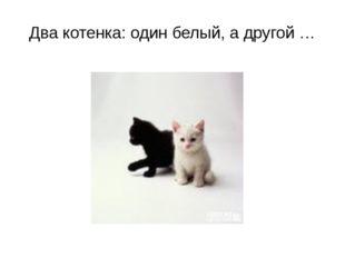 Два котенка: один белый, а другой …