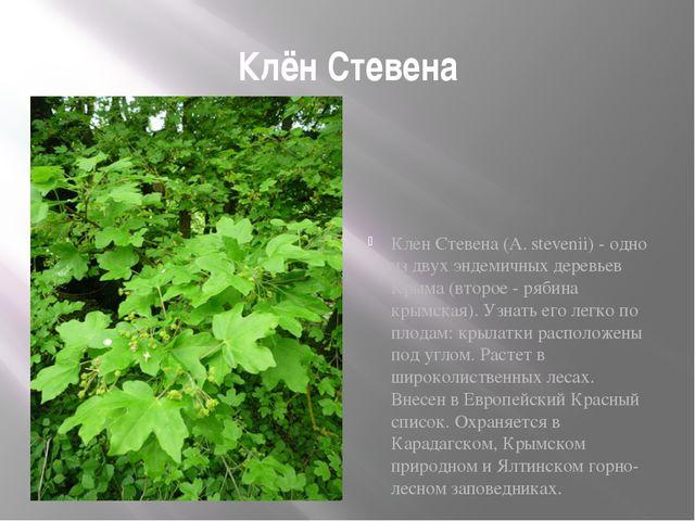 Клён Стевена Клен Стевена (A. stevenii) - одно из двух эндемичных деревьев Кр...