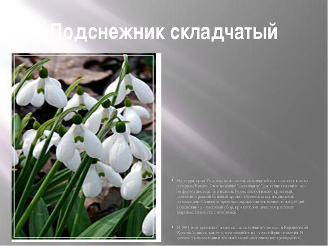 Подснежник складчатый На территории Украины подснежник складчатый произрастае...