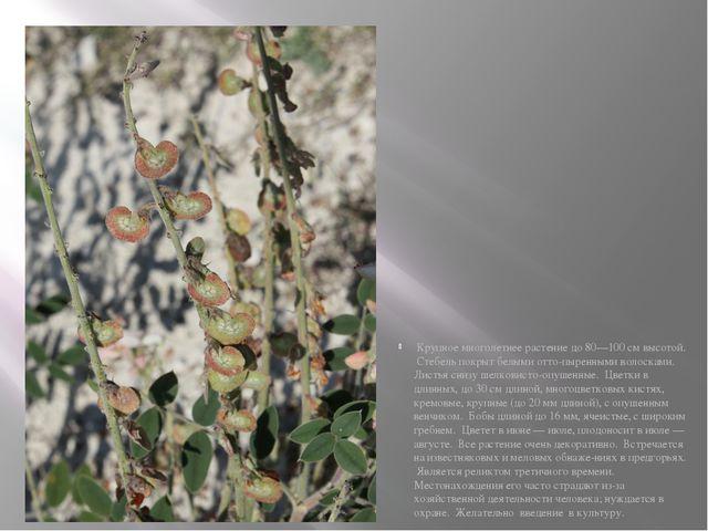 Крупное многолетнее растение до 80—100 см высотой. Стебель покрыт белыми отт...