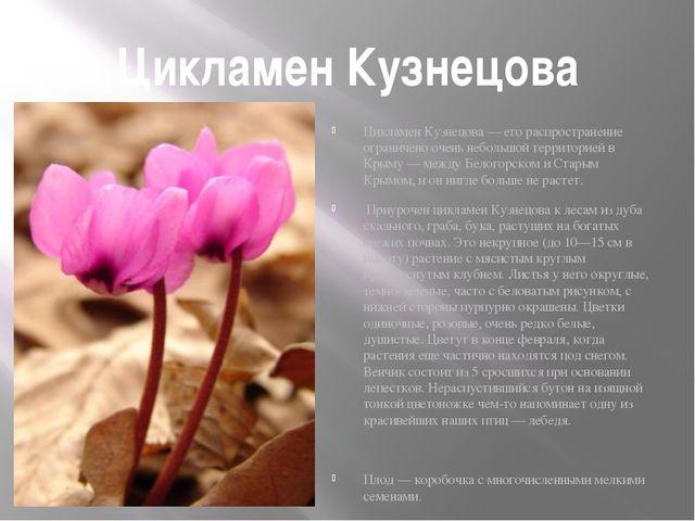 Цикламен Кузнецова Цикламен Кузнецова — его распространение ограничено очень...