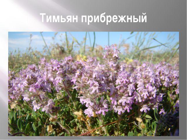 Тимьян прибрежный