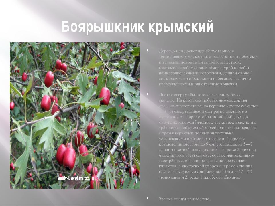 Боярышкник крымский Деревцо или древовидный кустарник с темновишневыми, мохна...