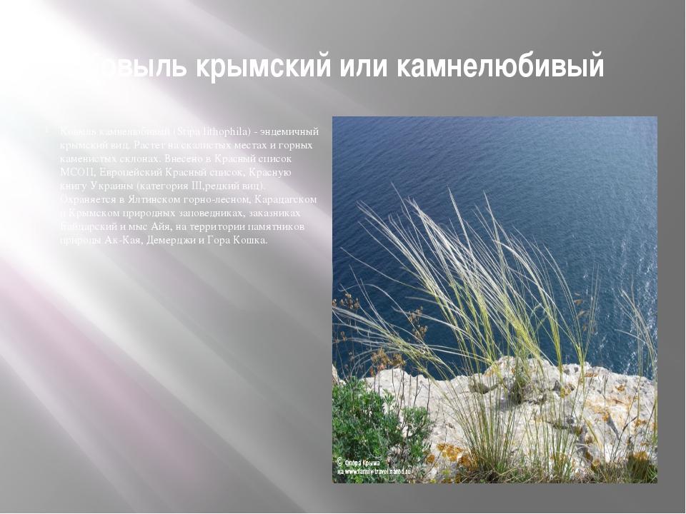 Ковыль крымский или камнелюбивый Ковыль камнелюбивый (Stipa lithophila) - энд...