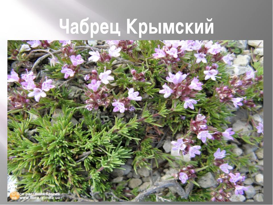 Чабрец Крымский