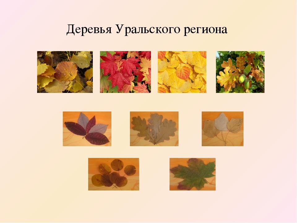 Деревья Уральского региона