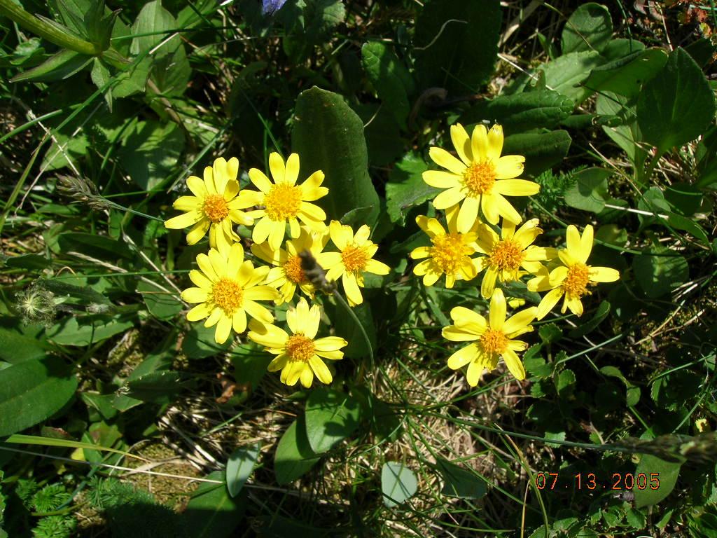 DSCN0224 фото Панкратова Д..JPG