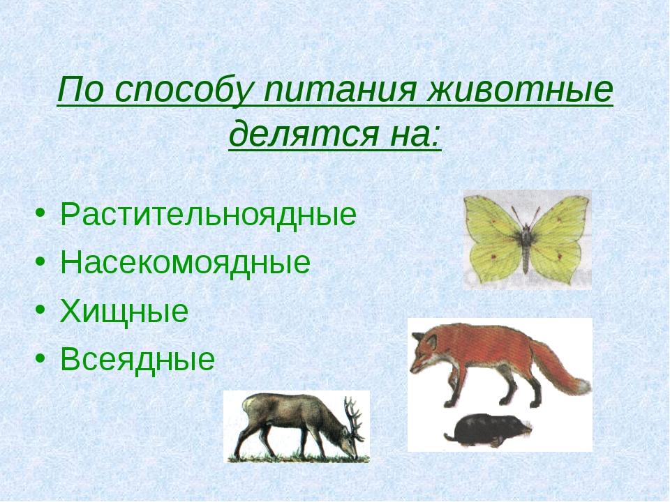 По способу питания животные делятся на: Растительноядные Насекомоядные Хищные...