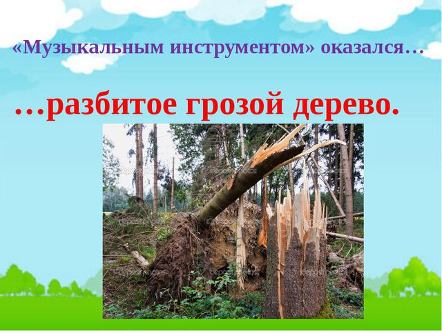 «Музыкальным инструментом» оказался… …разбитое грозой дерево.