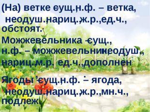 (На) ветке – сущ., н.ф. – ветка, неодуш., нариц., ж.р., ед.ч., обстоят. Можже