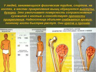 У людей, занимающихся физическим трудом, спортом, на костях, в местах прикреп