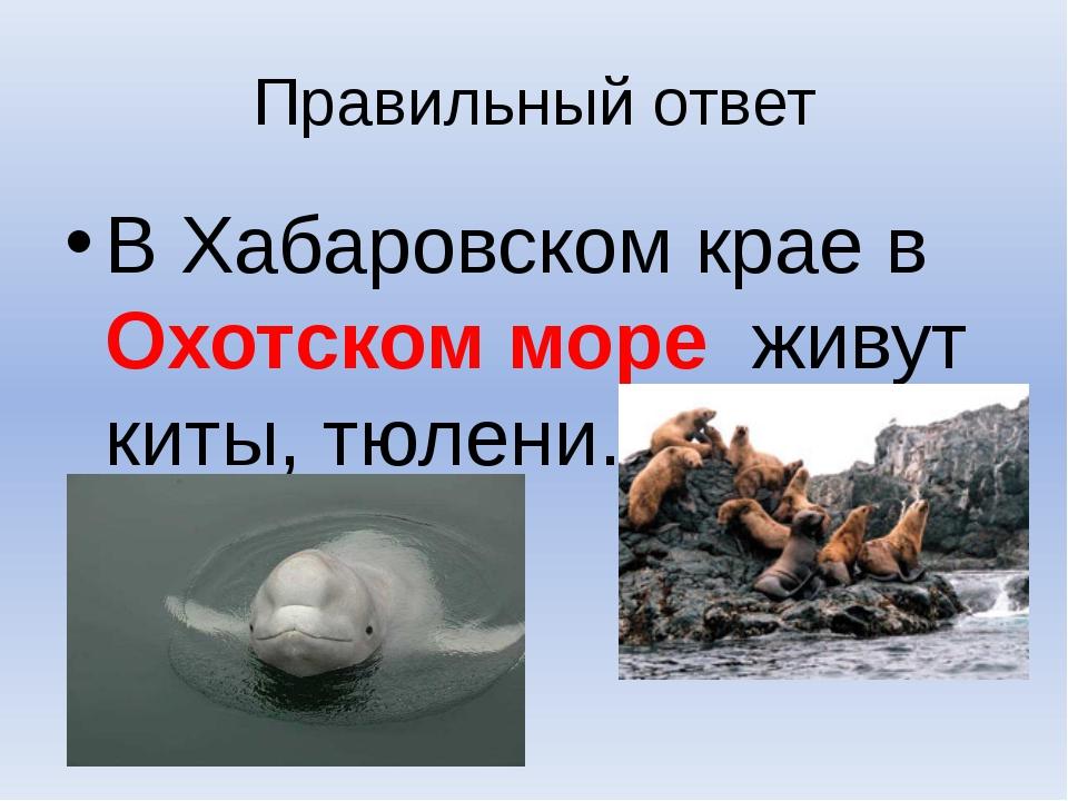 Правильный ответ В Хабаровском крае в Охотском море живут киты, тюлени.