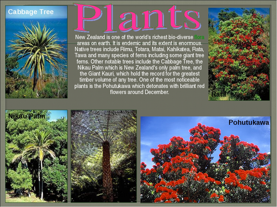 New Zealand is one of the world's richest bio-diverse flora areas on earth....