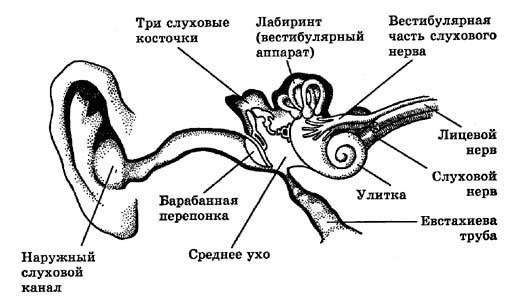 http://www.hudeika.ru/img/clip_image001_0004.jpg