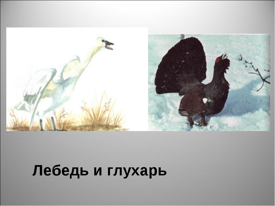 Лебедь и глухарь