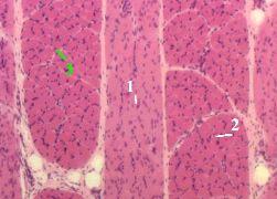http://nsau.edu.ru/images/vetfac/images/ebooks/histology/histology/r4/bs69.jpg