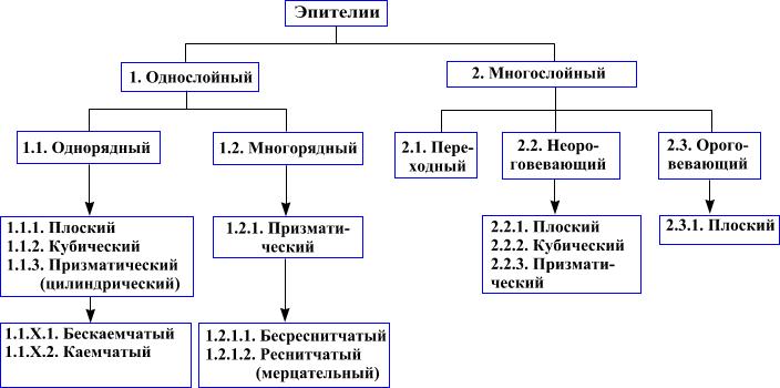http://nsau.edu.ru/images/vetfac/images/ebooks/histology/histology/r4/s2.gif