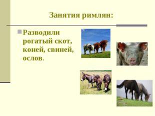 Занятия римлян: Разводили рогатый скот, коней, свиней, ослов.