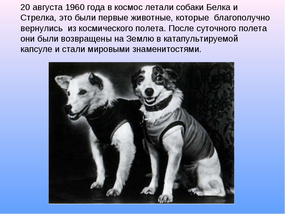20 августа 1960 года в космос летали собаки Белка и Стрелка, это были первые...