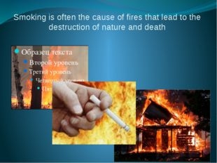 Smoking is often the cause of fires that lead to the destruction of nature an