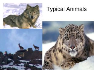 Typical Animals
