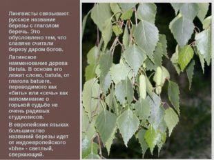 Лингвисты связывают русское название березы с глаголом беречь. Это обусловлен