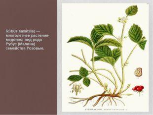 Костяни́ка, Костяника камени́стая (лат. Rúbus saxátilis) — многолетнее расте
