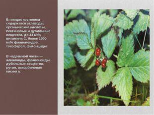 В плодах костяники содержатся углеводы, органические кислоты, пектиновые и д