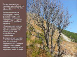 Почвоукрепитель, пригоден для облесения сухих крутых склонов, оползней. Расте