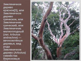 Земляничное дерево красное[3], или Земляничное дерево греческое, или Землянич