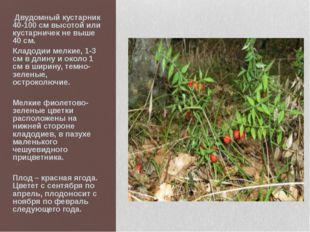 Двудомный кустарник 40-100 см высотой или кустарничек не выше 40 см. Кладоди