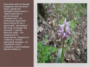 Королева цветов Крыма (недаром ученые всего мира семейство орхидей причисляют