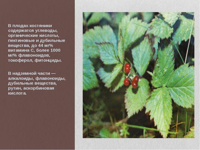 В плодах костяники содержатся углеводы, органические кислоты, пектиновые и д...