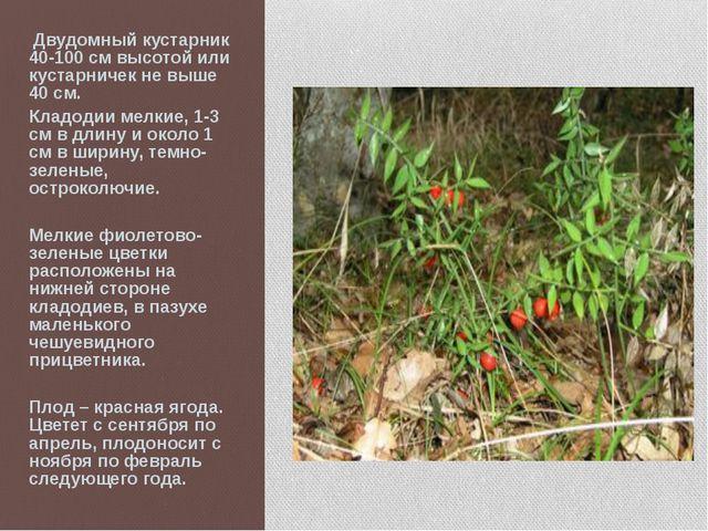 Двудомный кустарник 40-100 см высотой или кустарничек не выше 40 см. Кладоди...