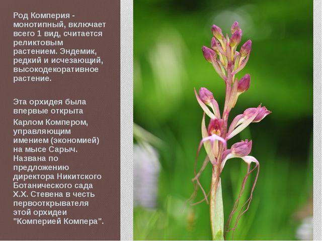 Род Комперия - монотипный, включает всего 1 вид, считается реликтовым растени...