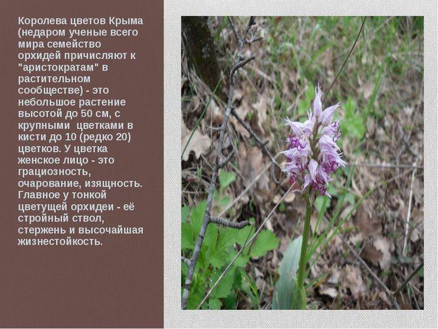 Королева цветов Крыма (недаром ученые всего мира семейство орхидей причисляют...