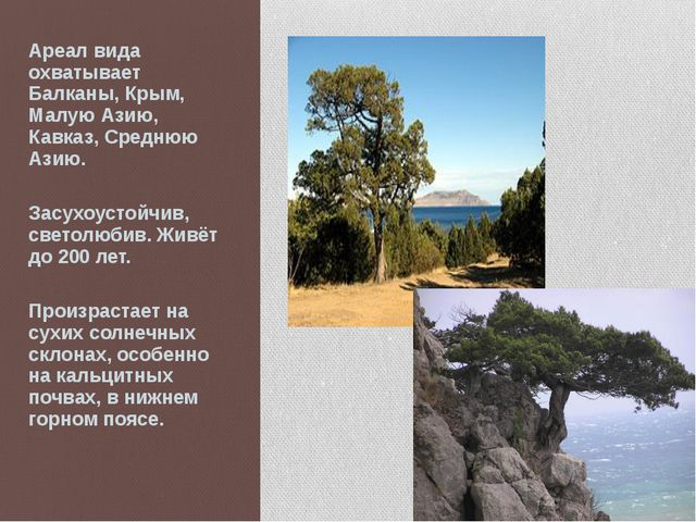 Ареал вида охватывает Балканы, Крым, Малую Азию, Кавказ, Среднюю Азию. Засухо...