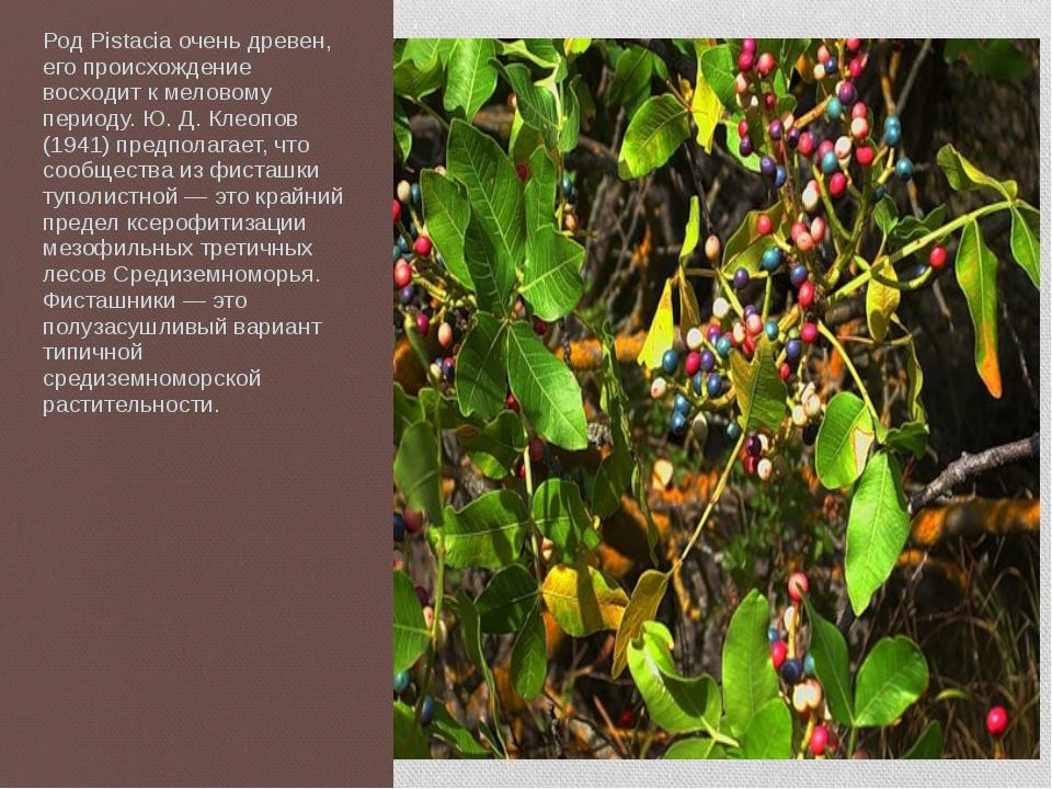 Род Pistacia очень древен, его происхождение восходит к меловому периоду. Ю....