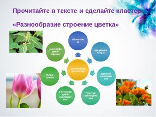 Прочитайте в тексте и сделайте кластер: «Разнообразие строение цветка»