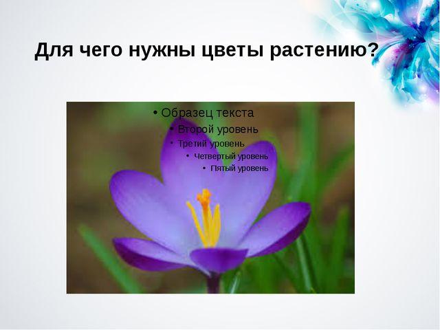 Для чего нужны цветы растению?