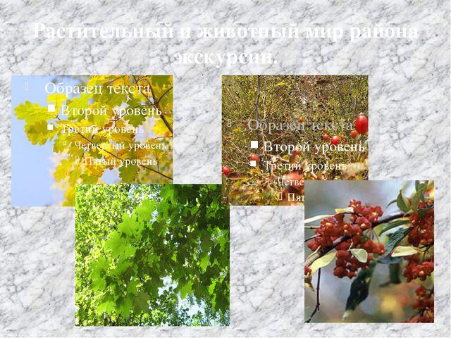 Растительный и животный мир района экскурсии.